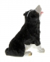 AT Collections 32116 - Border Collie hinten rechts