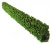 Brushwood TOYS BT2073 - Getrimmte Hecke vorne