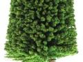 Brushwood- TOYS 2065 - Bäume Set Eiche groß