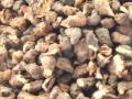 Brushwood TOYS BT2076 - Kartoffeln nah