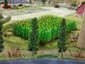 Farmworld Fehmarn - Maisfeld