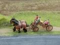 Farmworld Fehmarn - Pferdekutsche nah