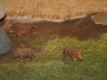 Farmworld Fehmarn Okt. 2015 - Wildschweine nah