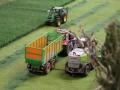 Farmworld Fehmarn Okt. 2015 - Claas Feldhäcksler im Einsatz