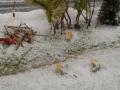 Farmworld Fehmarn Winter 2014 - Fuchs und Haasen
