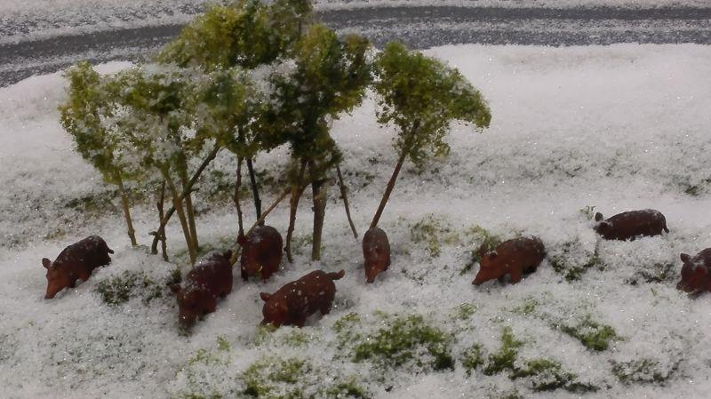 Farmworld Fehmarn Winter 2014 - Wildschweine