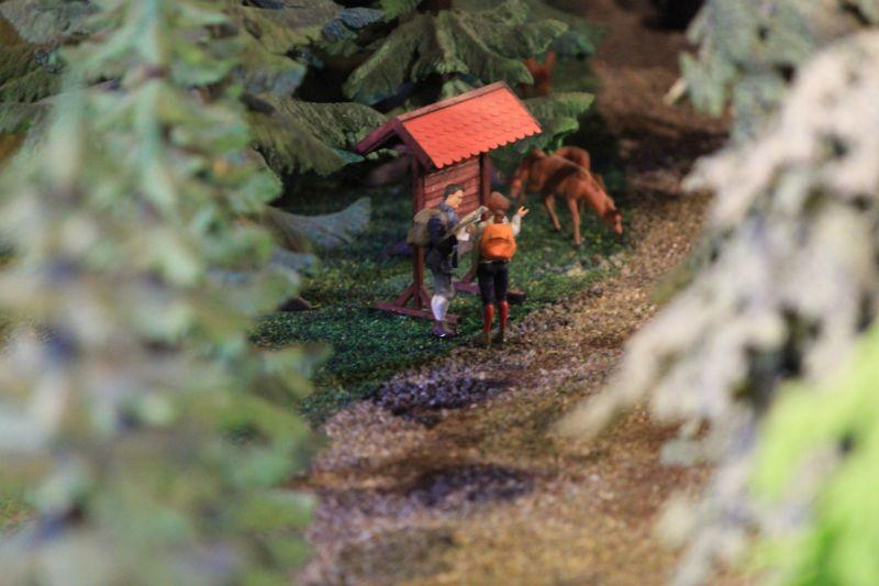 Field & Fun - Wanderer