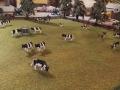 Field and Fun Ostern 2016 - Kühe auf der Weide