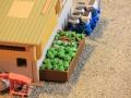 Field&Fun Sierhagen - Salat und Kohl