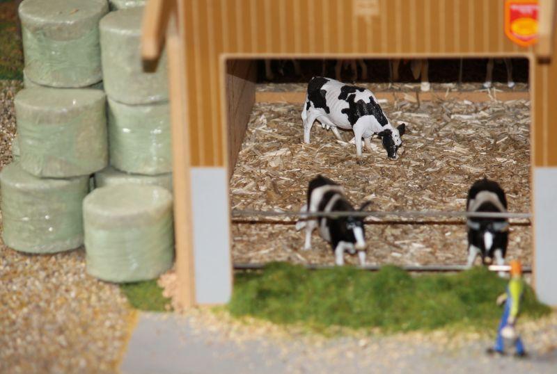 field&fun - Kühe im Stall
