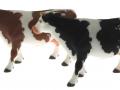 Siku 2490 - Zwei Kühe links