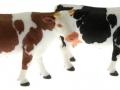 Siku 2490 - Zwei Kühe
