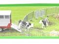 Siku 3870 - Steyr mit Viehanhänger Karton oben