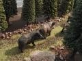 Wildschwein Rotte