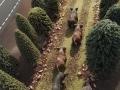 Wildschweine von oben