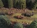 Wildschweine von der Seite