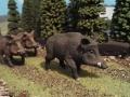 Wildschweine vorne nah