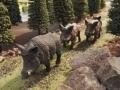Rotte von Wildschweinen