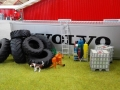 Traktorado 2014 in Husum - Ein Hund mach an einen Reifenstapel