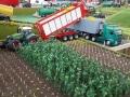 Traktorado 2014 in Husum - Maisfeld