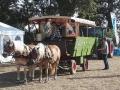 Sierhagen 2016 - Bundesentscheid Pflügen - Pferdekutsche